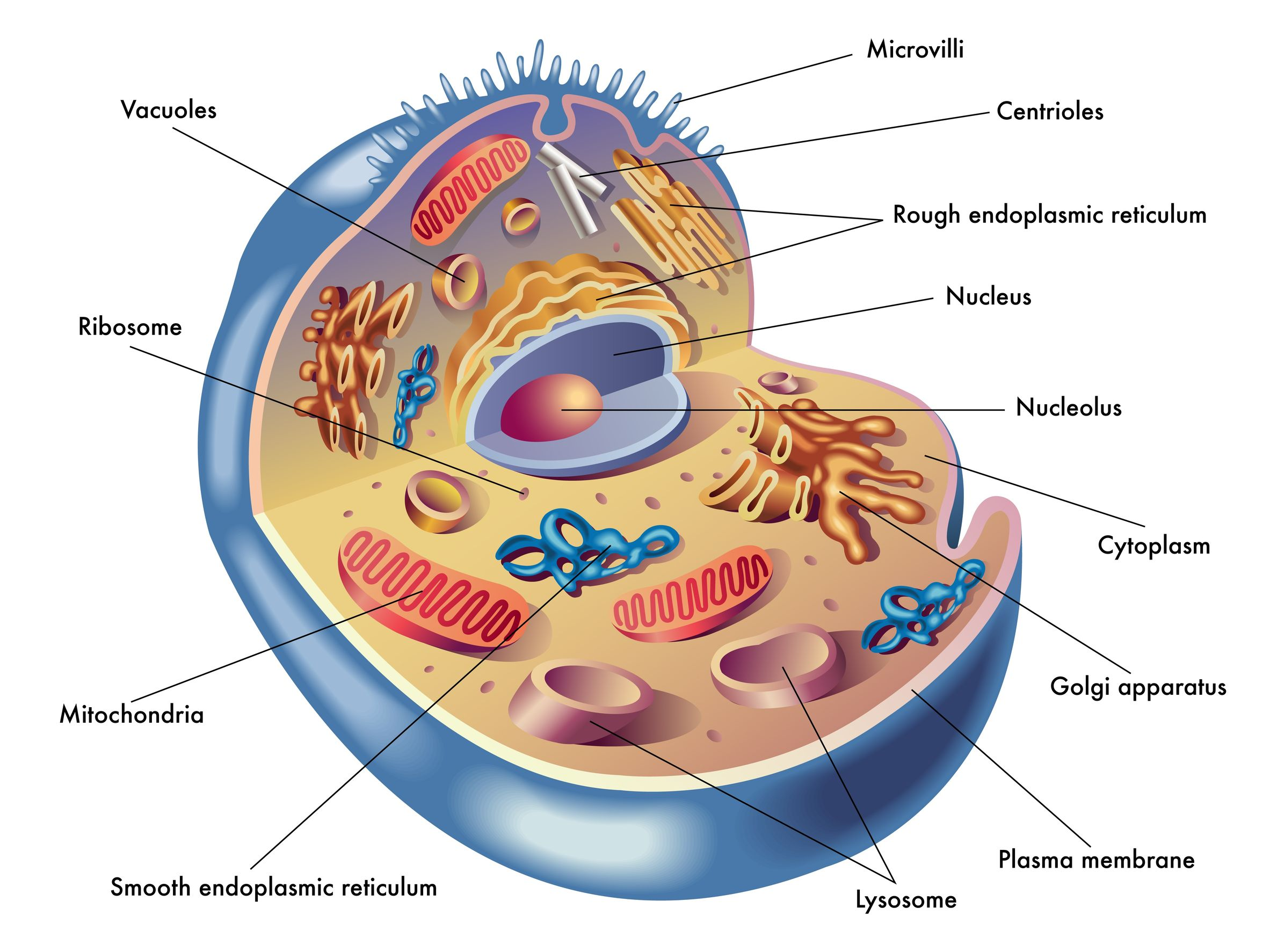 Bacterial Cell: Structure and Components | Microbiology